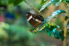 большая бабочка Стоковые Фото