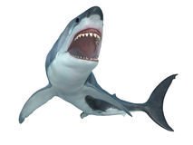 Большая белая акула снизу Стоковые Фото