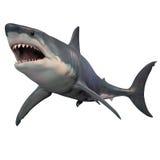 Большая белая изолированная акула Стоковые Изображения