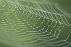 Большая белая сеть паука в росе в утре на зеленой предпосылке лета Стоковое Фото