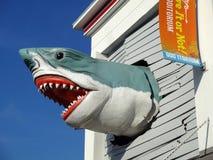 большая белизна акулы стоковое фото