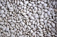 Большая белизна beans_5 Стоковое Изображение