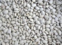 Большая белизна beans_6 Стоковое Фото