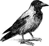 Большая ворона Стоковые Изображения RF