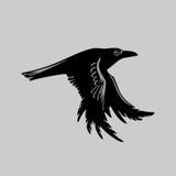 большая ворона Стоковое фото RF