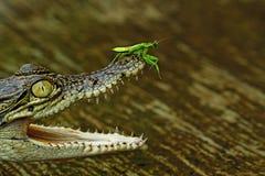 большая вода съемки макроса листьев зеленого цвета падения стоковое фото rf