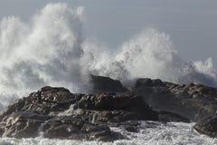 большая волна выплеска Стоковая Фотография