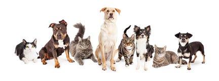 Большая группа в составе коты и собаки совместно Стоковые Изображения RF