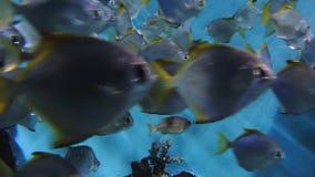 Большая группа в составе рыбы коралла сток-видео