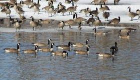 Мирное отступление зимы Стоковые Фотографии RF