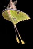 Большая желтая бабочка Стоковые Фото