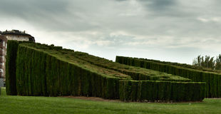 Большая изгородь Стоковое Фото