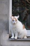 Большая кошка на окне Стоковое фото RF