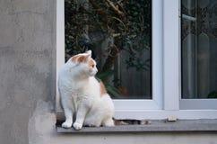Большая кошка на окне Стоковое Изображение