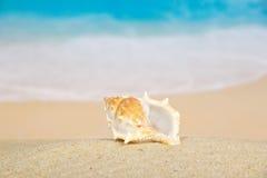 Большая красивая раковина Стоковое Фото