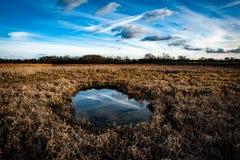Большая кровать bulrushes Стоковое фото RF