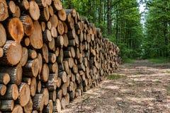 Большая куча древесины в лесе стоковые изображения rf