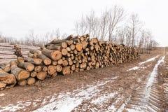Большая куча древесины стоковые фото