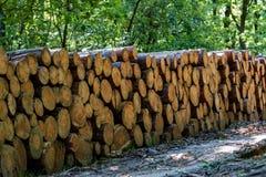 Большая куча древесины стоковое изображение