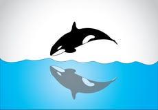 Большая молодая счастливая свободная дельфин-касатка скача из поверхности моря океана бесплатная иллюстрация