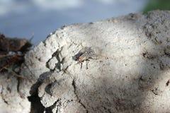 большая муха Стоковая Фотография RF