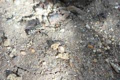 большая муха Стоковое Фото