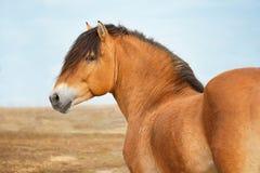 большая лошадь Стоковое Изображение