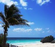 Большая пальма на берег Стоковые Фотографии RF