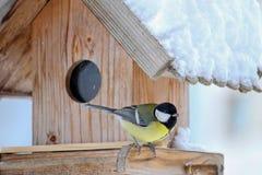Большая птица синицы (майор Parus, Kohlmeise) во время зимы Стоковые Изображения