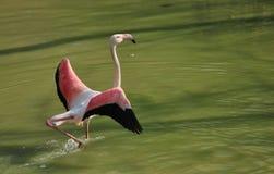 большая птица Стоковое Изображение