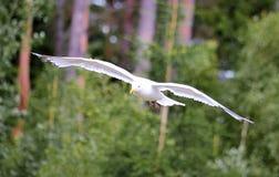 большая птица Стоковое Фото