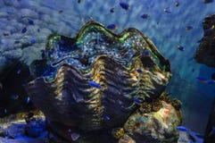 большая раковина моря Стоковое Изображение