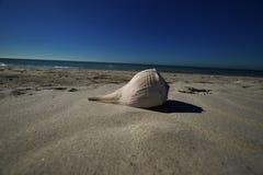 Большая раковина на пляже Стоковые Изображения