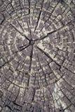 большая древесина вала текстуры Стоковое Изображение RF