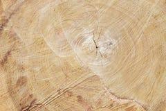 большая древесина вала текстуры Стоковое Изображение