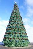 Большая рождественская елка Стоковая Фотография