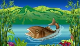 Большая рыба в море Стоковое Изображение RF