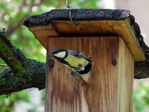 Большая синица сидя на birdhouse Стоковое Изображение