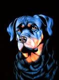 Большая собака на черном бархате Стоковые Изображения RF
