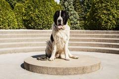 большая собака Стоковое Изображение RF