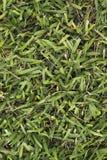 Большая текстура предпосылки зеленой травы лист только Стоковое фото RF
