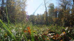 Большая трава Стоковые Изображения RF