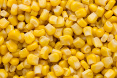 Большая часть желтой текстуры зерен мозоли Стоковое фото RF