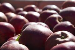 Большая часть яблок в деревянной коробке в конце вверх Стоковая Фотография RF