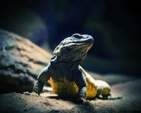 Большая ящерица готовая для сражения Стоковая Фотография