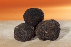 Больше всего надушенное грибов, французского черного трюфеля Стоковые Изображения RF