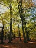 Больше деревьев Autum Стоковые Фото