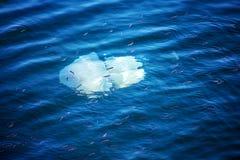 Больше медуз глубины плавая в лагуну моря в результате t Стоковое Изображение RF