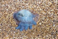 Больше медуз глубины плавая в лагуну моря в результате t Стоковые Фото