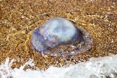 Больше медуз глубины плавая в лагуну моря в результате t Стоковое Фото